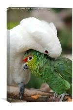 Parrot Cuddle, Canvas Print