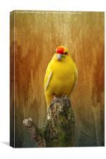 Kakariki The Little Parrot, Canvas Print