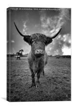 Rugged High Park Cattle, Canvas Print