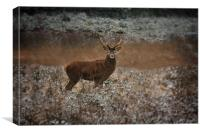 Red Deer Stag In The Wild, Canvas Print