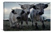 The Three Shaggy Cows, Canvas Print