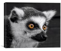 Ring-Tailed Lemur, Canvas Print