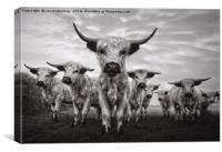 Highland Cattle Mixed Breed Mono, Canvas Print