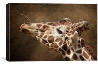 Giraffe Reaching For A Branch, Canvas Print