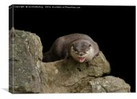Yawning Otter, Canvas Print
