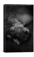 Newborn Baby Gorilla, Canvas Print