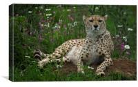 Cheetah Amidst Spring Flowers, Canvas Print