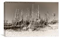 Dead Trees On The Beach, Canvas Print