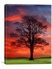 Sunset Wood, Canvas Print