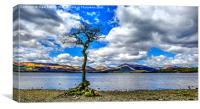 Oak Tree - Loch Lomond, Canvas Print