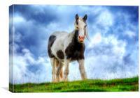 Highland Horse, Canvas Print