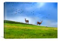 Chatsworth Deer, Canvas Print