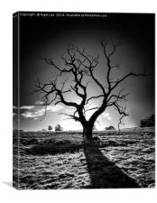 Withered Tree, Canvas Print