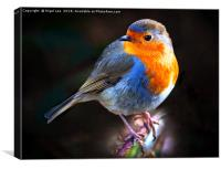 Red Robin, Canvas Print