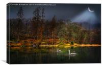 Swans - Yew Tree Tarn, Canvas Print