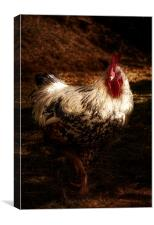 The Cockerel, Canvas Print