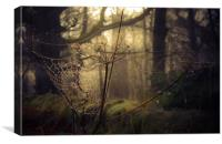 The Cobweb, Canvas Print