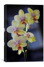 Yellow Orchids, Canvas Print