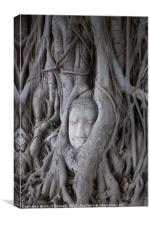 A Buddha head with a tree growing around it , Canvas Print