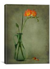 Orange Freesia, Canvas Print
