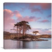 Scots Pines at Loch Assynt, Sutherland., Canvas Print