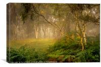 Birches and Mist., Canvas Print