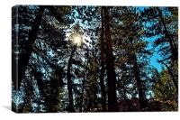 Yosemite trees, Canvas Print