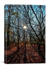 Autumn sun in the forest, Canvas Print