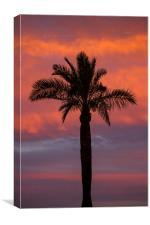 Palm Silhouette, Canvas Print