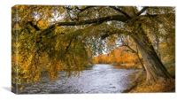 Autumn, River Don
