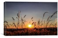 Sunset Grass, Canvas Print