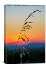 Standing Tall At Sunset, Canvas Print