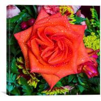 Orange Rose, Canvas Print