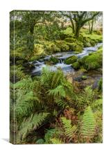 Flowing Beside The Ferns., Canvas Print