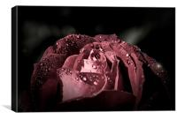 Sparkling Rose in the storm, Canvas Print