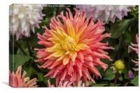 Colourful  Dahlia, Canvas Print