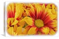 Chrysanthermum Closeup, Canvas Print