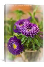 Aster in a vase, Canvas Print