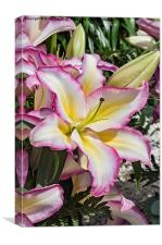 Lily Lovely, Canvas Print
