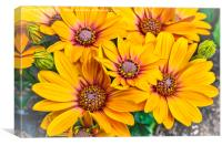 Bright and Cheerful, Canvas Print