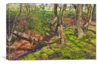 Woodland stream, Canvas Print