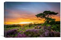 New Forest Sunset at Bratley View, Canvas Print