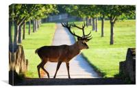 Wild Red Deer Stag at Wollaton Hall, Canvas Print