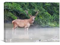 Wild Red Deer Stag in the Lake, Canvas Print