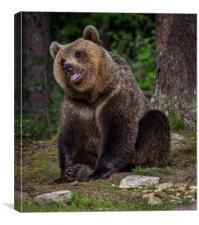 Russian Brown Bear, Canvas Print