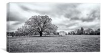 Old tree at Danson Park, Canvas Print