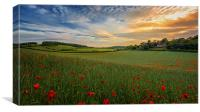 Sunset on Poppy Field, Canvas Print
