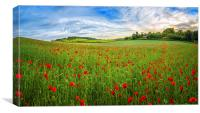 Sunset on Poppy Field in Kent, Canvas Print
