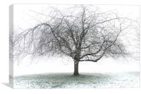 Frosty Tree, Canvas Print