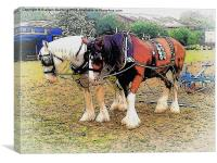 Shire Horses, Canvas Print
